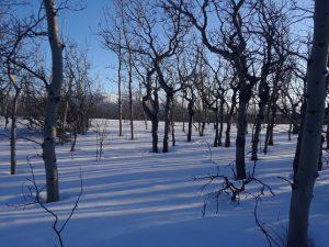 A Winter Tale 2